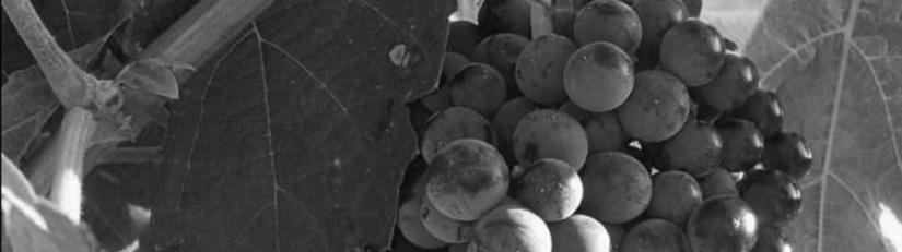 uvas-tapiz